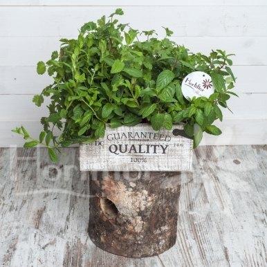 caja madera aromáticas hortiflor floristas 1