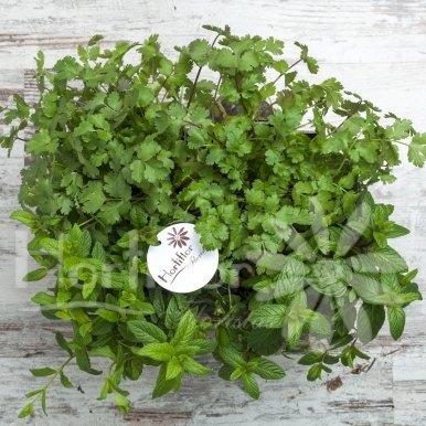 caja madera aromáticas hortiflor floristas 2