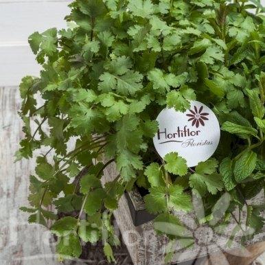 caja madera aromáticas hortiflor floristas 3