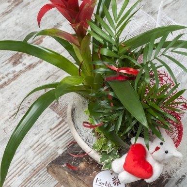 centro plantas variadas hortiflor floristas 1